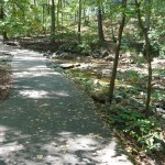 wooded trail in virginia