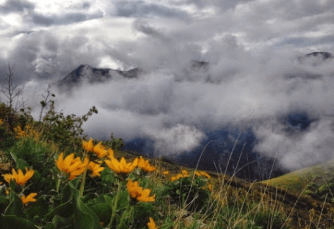Sunflowers and Clouds on Salt Lake's Mt. Wire