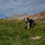 Colorado's Ice Lake Basin Wildflower Display