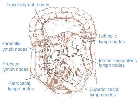 SEER Training Regional Lymph Nodes