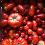 Local Grown Garden State Tomatoes