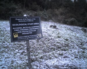 Snow in Claremont Canyon, December 7, 2009