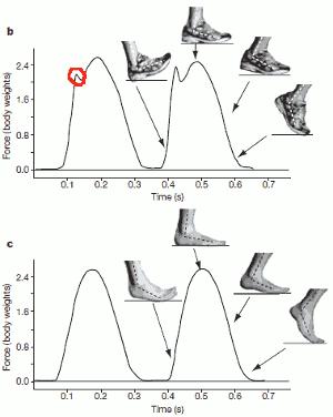 En illustration från Liebermans studie som sägs illustrera skillnaden i kraftkurvornas utseende mellan löpning barfota och löpning med skor