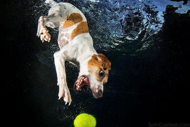 Cute Monkey Wallpaper 15 Hilarious Photos Of Dogs Trying To Fetch A Ball