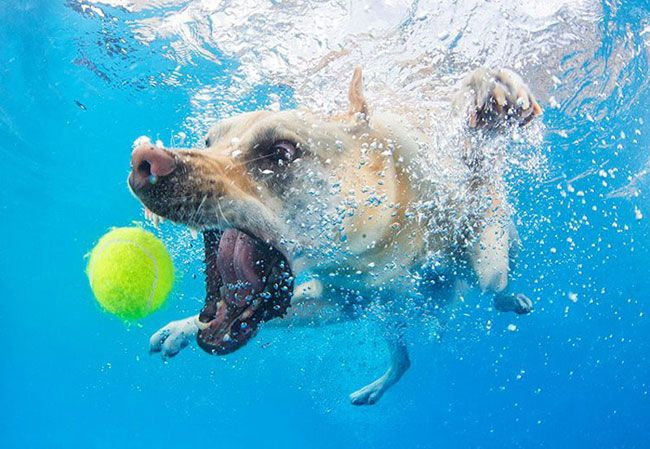 Crazy 3d Wallpapers 15 Hilarious Photos Of Dogs Trying To Fetch A Ball