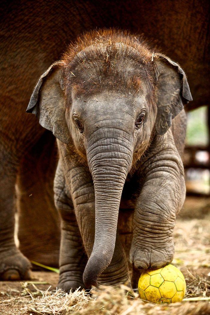 Cute Elephant Wallpaper Hd 17 Adorable Heart Melting Baby Elephants