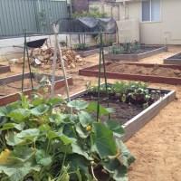 Getting your garden through a Perth summer