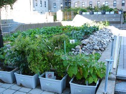 Rooftop gardening is possible with a little preparation.
