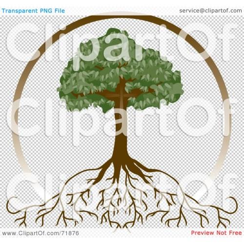 Medium Crop Of Tree With Deep Roots