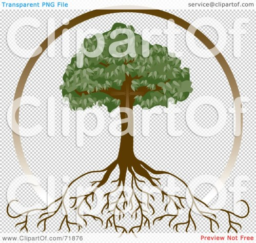Medium Of Tree With Deep Roots
