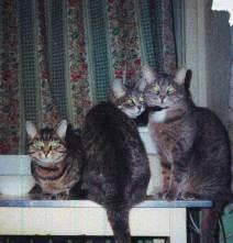 Кошки Бабетта, Мурка, Фруся. Москва, Чистый пер. 2002