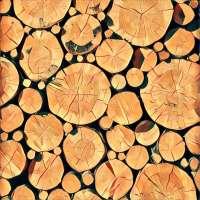 Holz - Traum-Deutung