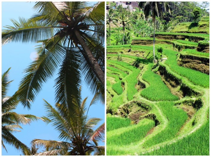 Tegalalang Rice Terraces  - Ubud, Bali, Indonesia