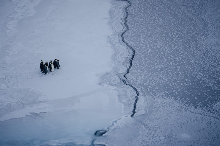 Penguins at the ice edge