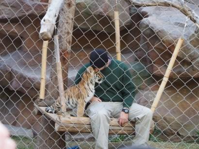 Attraktion, Touristenattraktion, Sehenswürdigkeit, Tigerbaby, Tiger, Baby, zahmes Tigerbaby, Tigerwelpe
