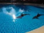 Attraktion, Touristenattraktion, Sehenswürdigkeit, The Mirage, Dolphin, Delfine, Delphine