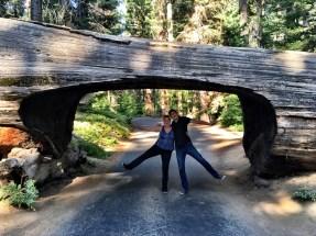 Kings Canyon, King Canyon, Wald, Riesenbaum, Riesenbäume, Mammutbäume, Riesenmammutbäume, Sequoia, Redwood, Sequoia Nationalpark, Sequoia und Kings Canyon Nationalpark, Nationalpark, USA, Amerika, Kalifornien, Wälder, Wandern, Wanderung, Touristenattraktion, Sehenswürdigkeit, Ausflug, Ausflugsziel, Wochenendtrip, Moro Rock, Bergsteigen, klettern, Sierra Nevada, Tunnel Log, Drive Thru-Tree, durchfahrbarer Baum, durchfahrt