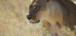 The dry landscapes of Makgadikgadi and Nxai pans