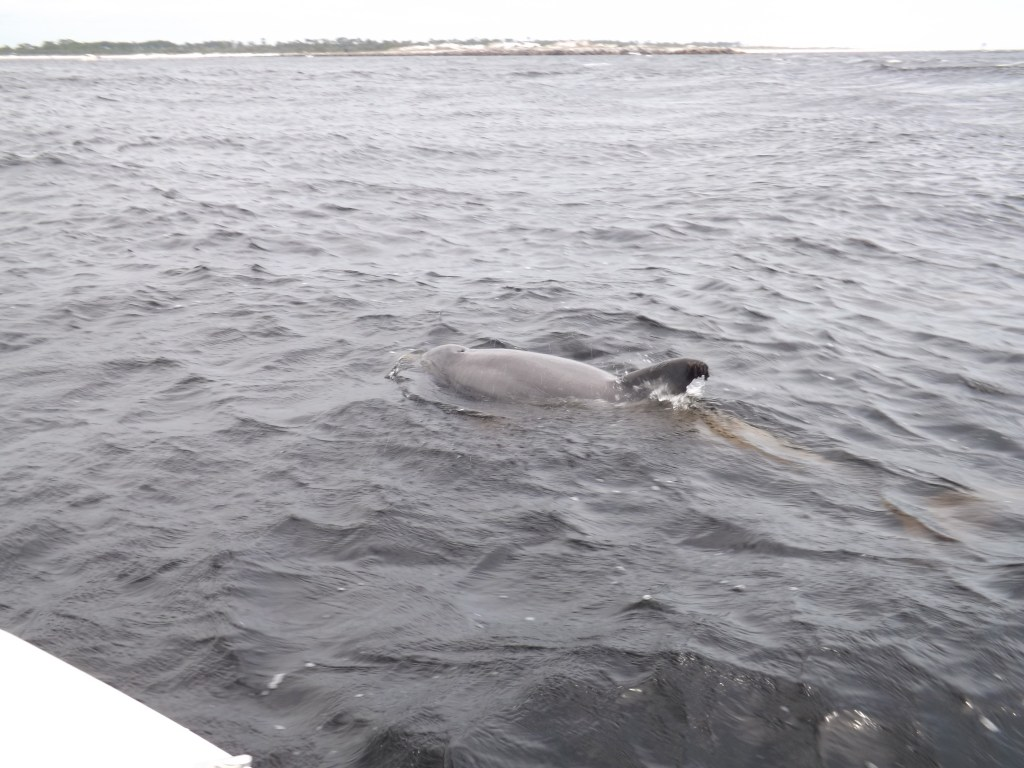 Swim with Dolphins on Blue Dolphin Tours