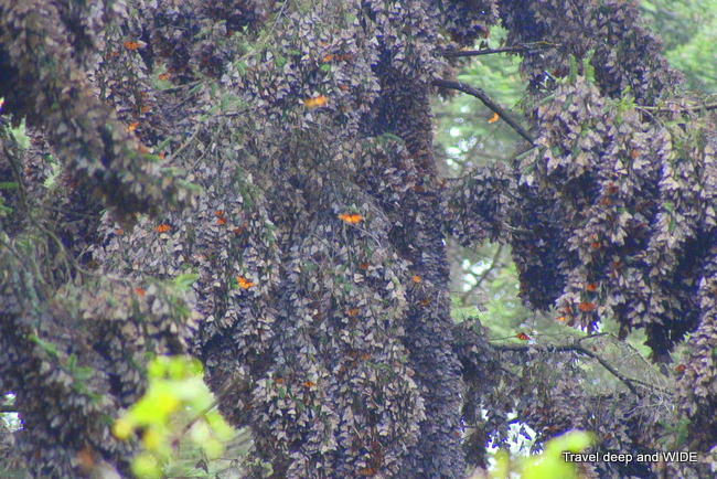 butterflies on trees.