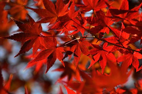 外国人観光客に人気の観光スポットランキング。TOP5には京都でも東京でもないある県がランクインしていた。