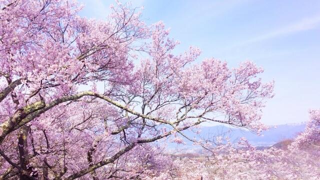 春休みは国内旅行がおすすめ!厳選4箇所をご紹介!