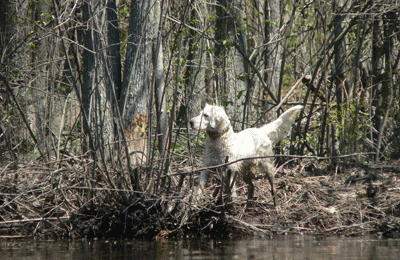 Barren Creek Brittany Spaniel