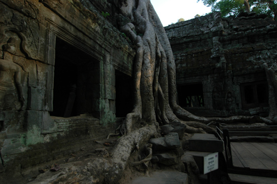 Ta Phrom Temple, Angkor, Cambodia