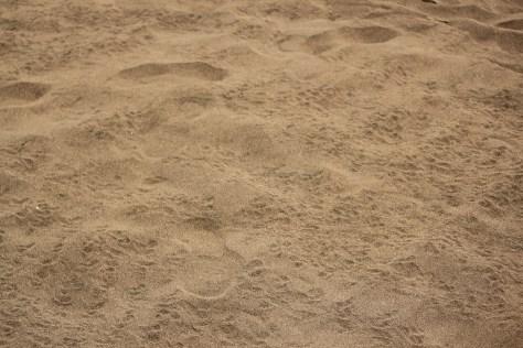 Green Sea Turtle Footprints; Tortuguero, Costa Rica; 2013