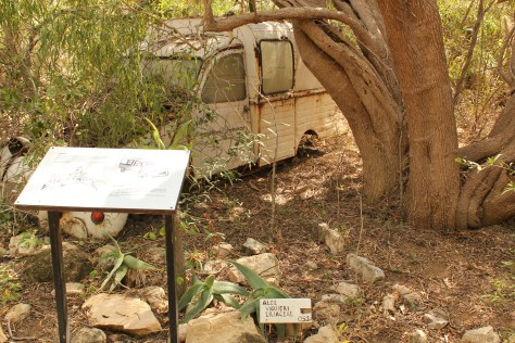 Researcher's Vehicle Dominated by Plant Life; Toliara, Republic of Madagascar; 2013