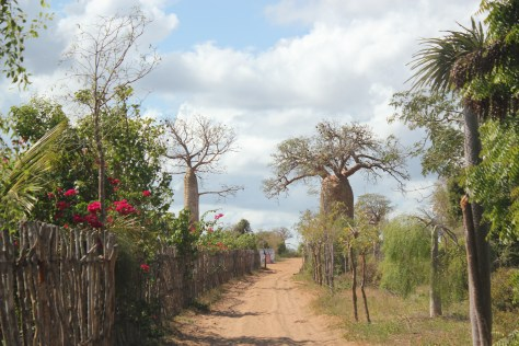 The Path to the Baobab Trees; Ifaty, Republic of Madagascar; 2013