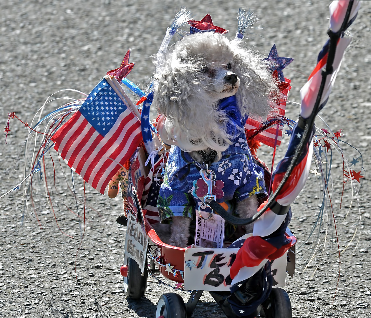 patriotic dog ashland 4th of July parade 2012