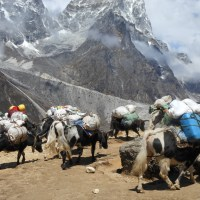 A Word a Week Challenge: Herd