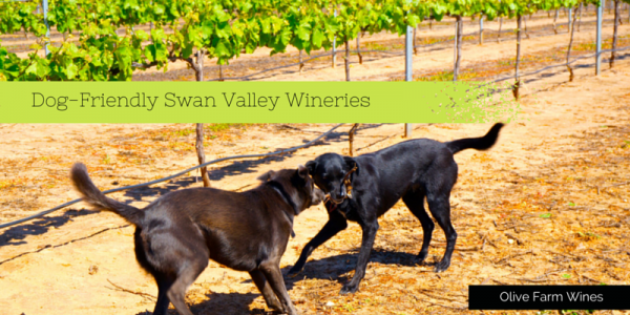 Dog Friendly Wineries Swan Valley