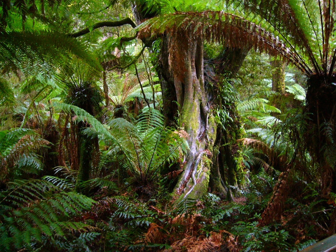 3d Stone Effect Wallpaper Uk Tropical Rainforest Facts Travelling Moods