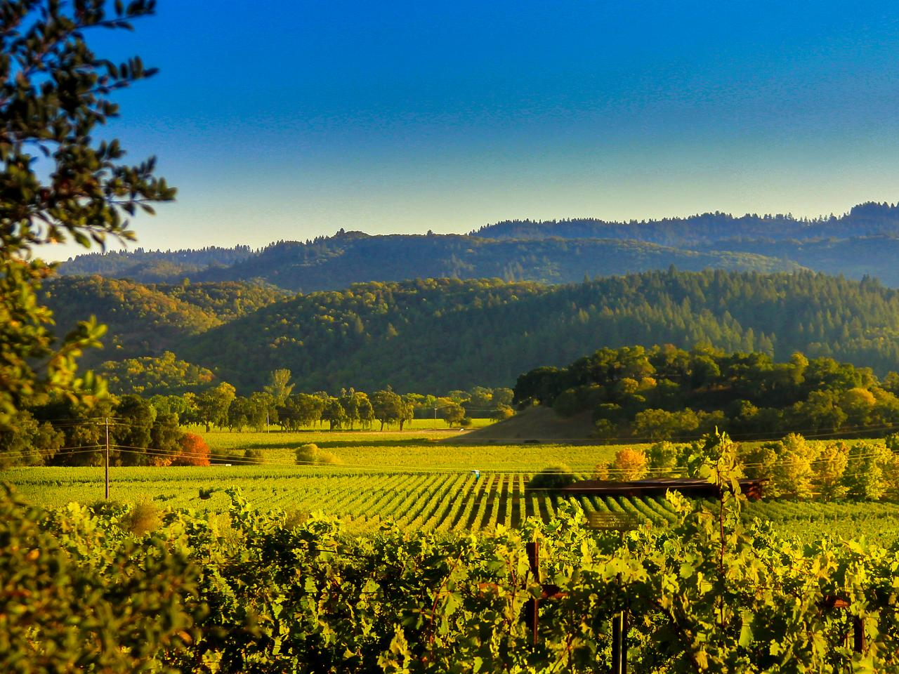 Fall Scenery Hd Wallpaper Where To Play Stay And Taste In Napa Valley Travel Noire