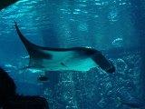 Atlantis Aquarium