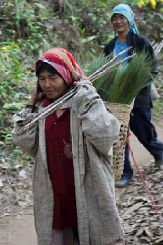 Woman returning from a day at work, Akha Ama coffee village near Chiang Mai, Thailand.
