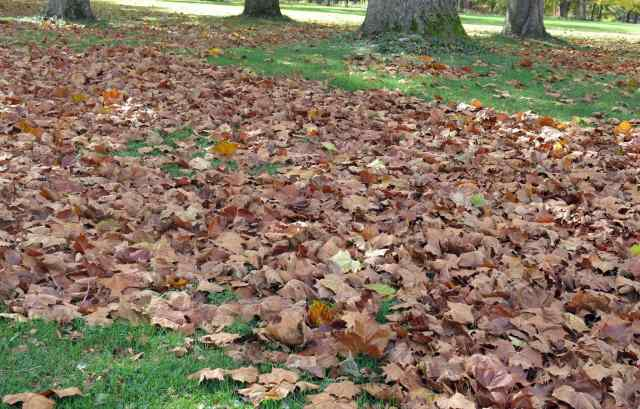 I love crunchy leaves