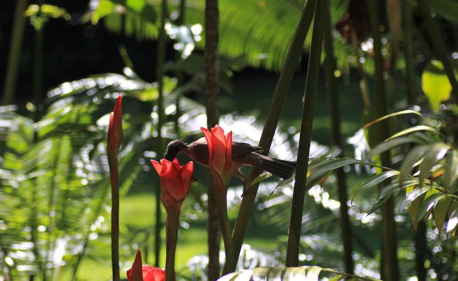 Cairns Botanic Garden  (25 of 34)
