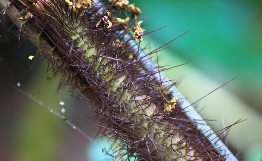 Cairns Botanic Garden  (5 of 34)
