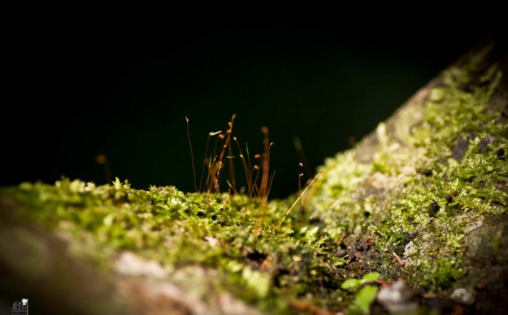 Borneo forest floor by Mica Ivealis Travel This Earth