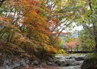 The Ultimate South Korea Fall Travel Guide for Visitors ...