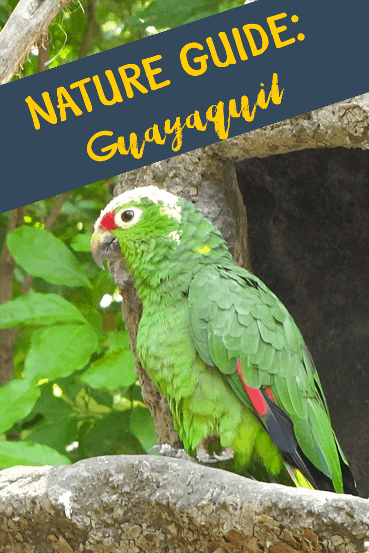 nature-guide-guayaquil