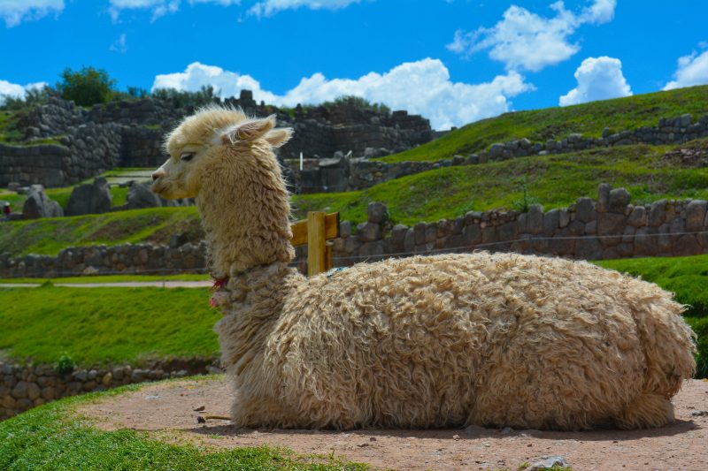 Walking exploration of Cusco, Peru in just 8km