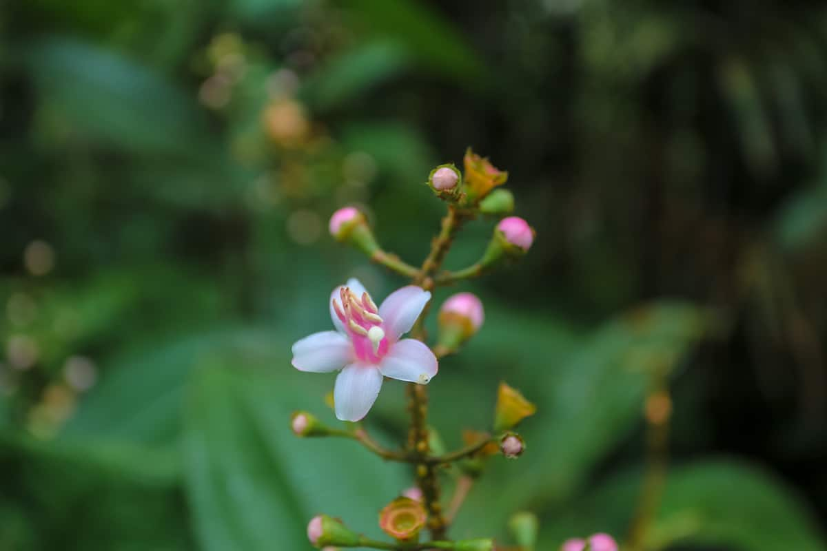 Flower - Mandaripanga Yasuni Jungle Expedition - Glamping in Yasuni National Park