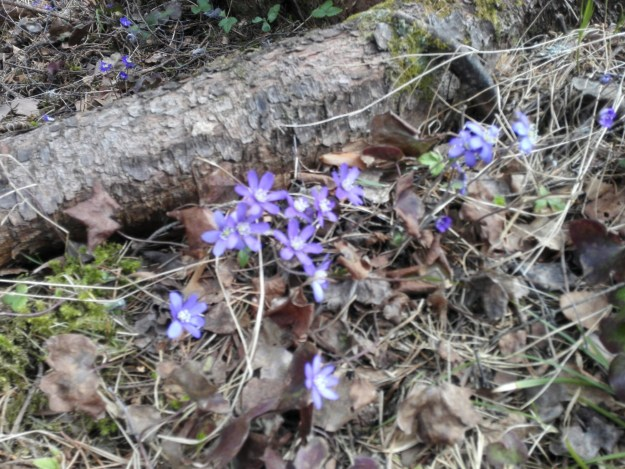 Spring in Östersund