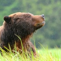 Wildlife Photography in the Great Bear Rainforest - Top 12 Tips
