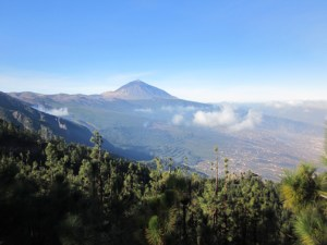 Tenerife Teide National Park Evergreens on TravelXena.com