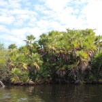 Boat_to_Lamanai_Belize_Travel_Xena_18